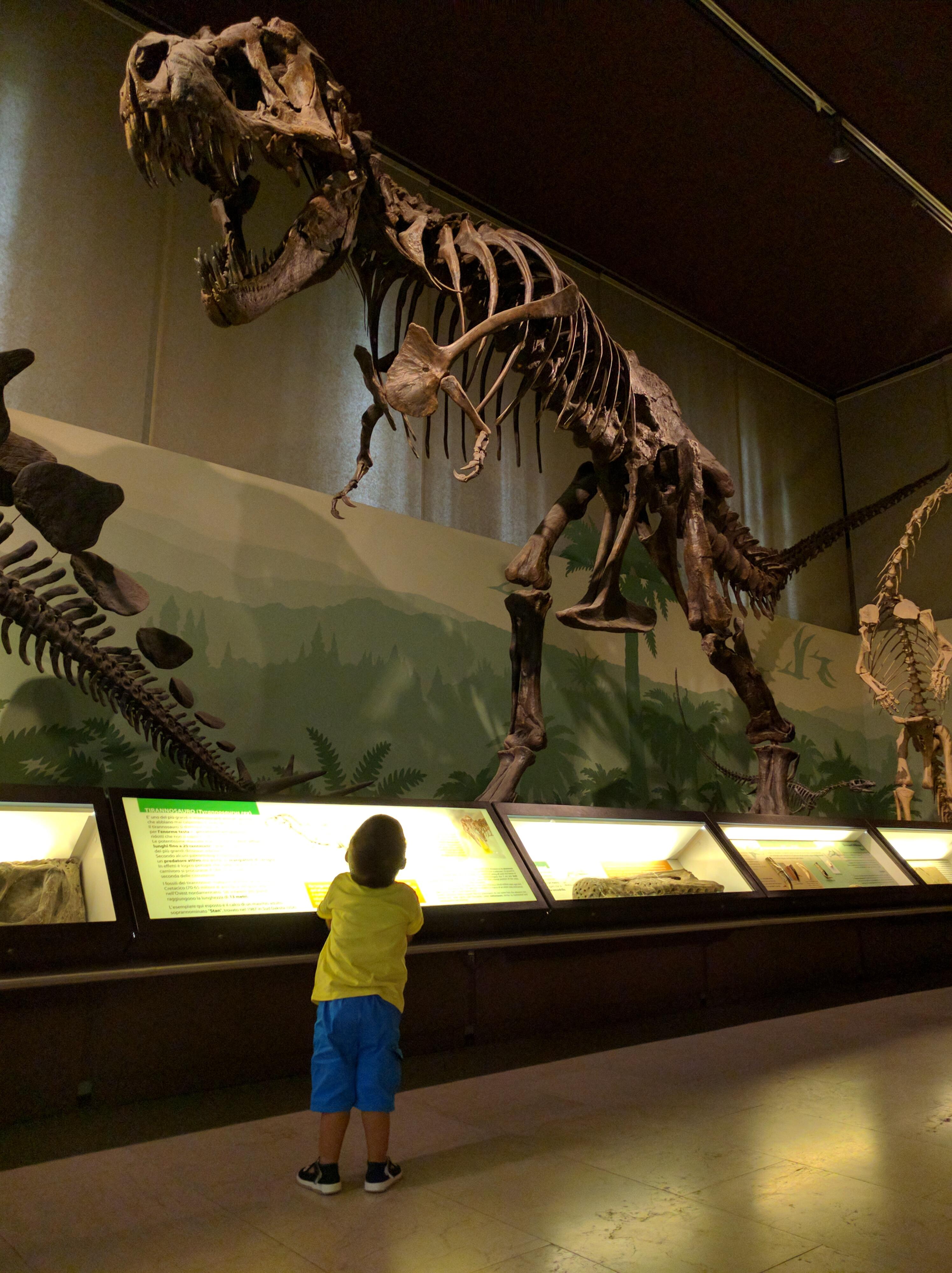 Musei per bambini a Milano - Museo Storia Naturlae