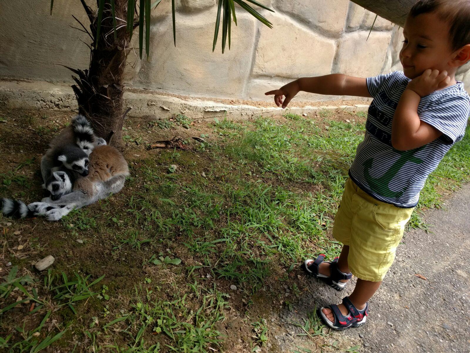 Safari Park Lemuri