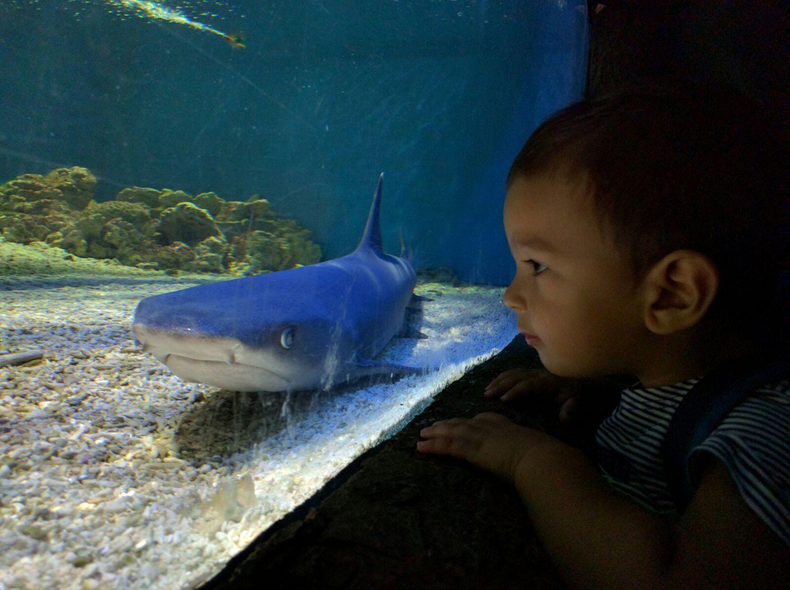 Safari Park acquario