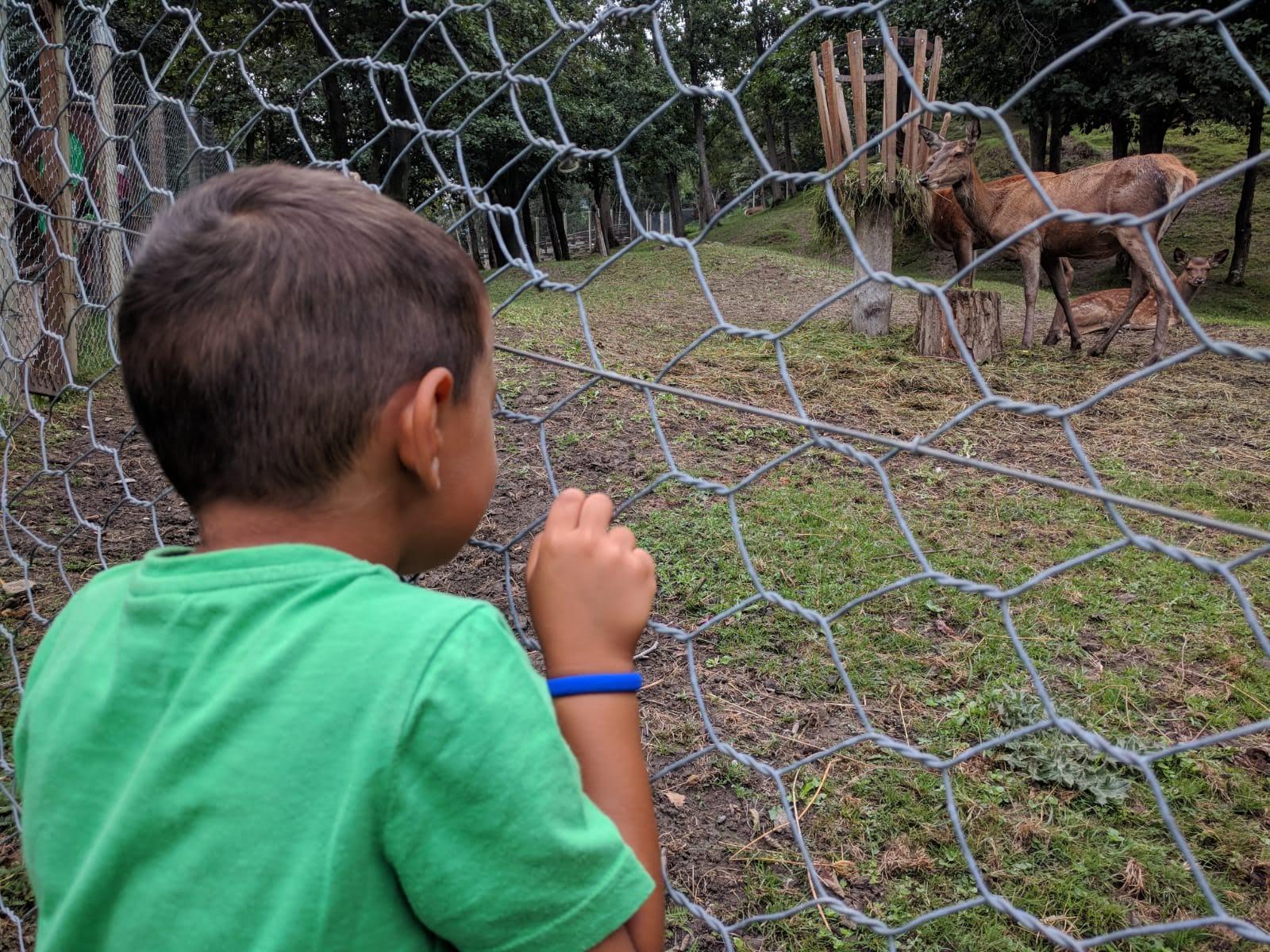 Parc-Animalier7